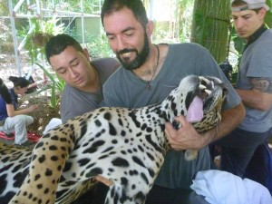 Dental check-up and cleaning for the Jaguars