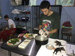 Zorro pelón rehabilitación en NATUWA Santuario.