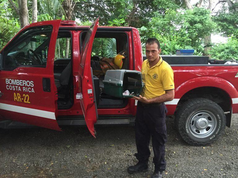 Lee más sobre el artículo Cuerpo de Bomberos rescatan ardilla (<em>Sciurus variegatoides</em>).