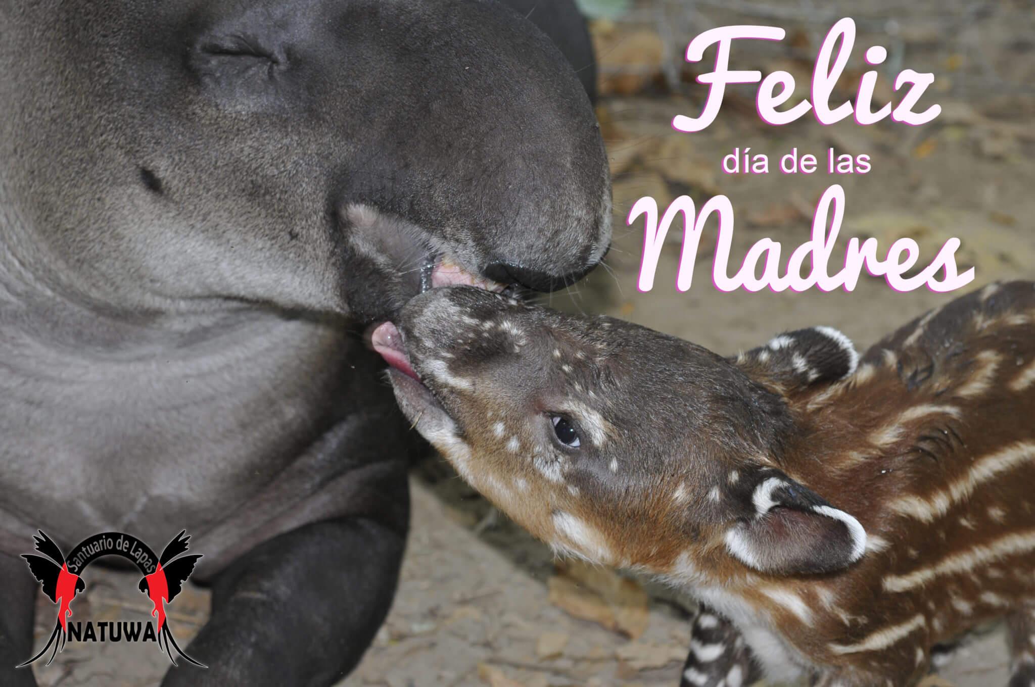 En este momento estás viendo Feliz día de las madres!!