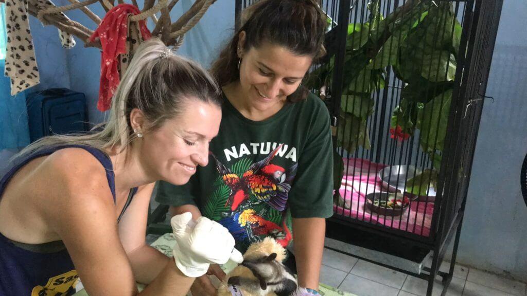Voluntariado con animales silvestres en Costa Rica