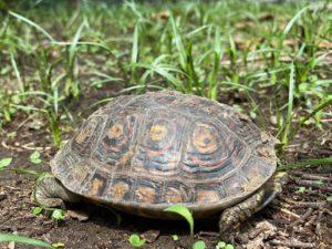 Día muncial de las tortugas en NATUWA