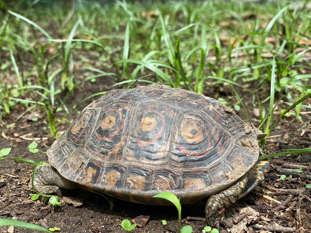 You are currently viewing World turtle day